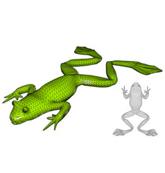 Frog on white vector