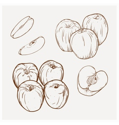 set of drawing apples Golden deliciou vector image