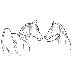 pair of horses vector image