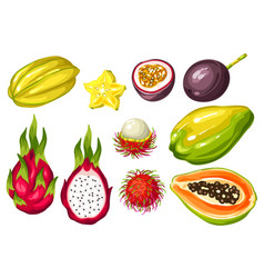 Exotic tropical fruits set of asian vector