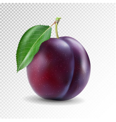 Ripe plum with green leaves quality photo vector