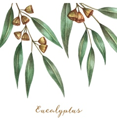 Watercolor eucalyptus leaves and branches vector image