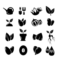 Seed and gardening icons vector