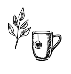 Sketch mug with tea leaves vector