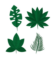 tropical leaves exotic foliage natural differents vector image