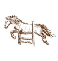 Wild horse jumping over barrier vector image