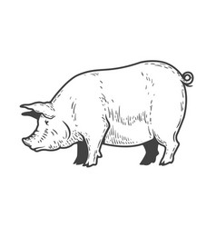 Pig isolated on white background design elements vector