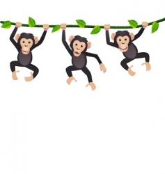 three chimpanzee vector image