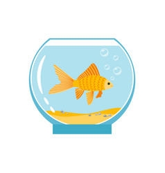 gold fish in small bowl isolated on white vector image