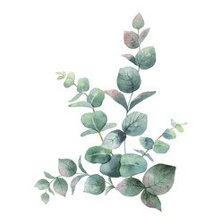Watercolor bouquet with green eucalyptus vector