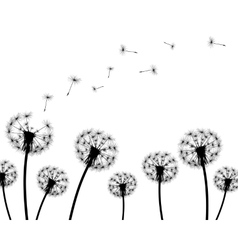 Background dandelion faded silhouettes vector