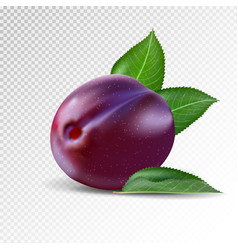 fresh plum on transparent background realistic vector image vector image