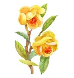Watercolor summer garden blooming jasmine flower vector