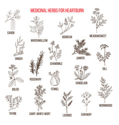 best herbal remedies for heartburn vector image vector image