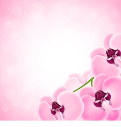 Background with orchid vector image