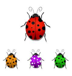 ladybugs vector image vector image