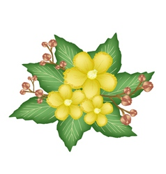A group of fresh yellow simpor flowers vector