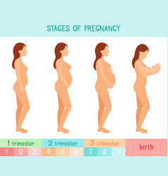 Pregnant beautiful woman infographics vector