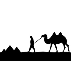 Man with camel of the pyramids vector
