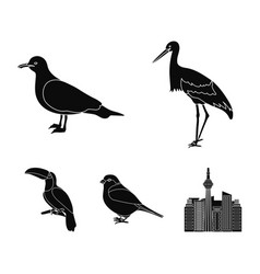 A stork a seagull and various species birds set vector
