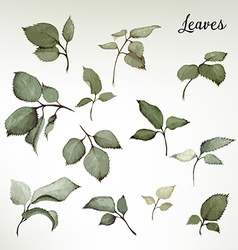 Leaves watercolor can be used as greeting card vector