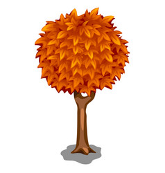 Beautiful autumn tree on a white background vector
