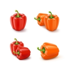 Colored orange and red sweet bell peppers vector