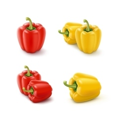 Colored yellow and red sweet bell peppers vector