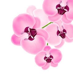 Beautiful orchid vector