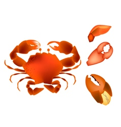Steamed crab isolated on a white background vector