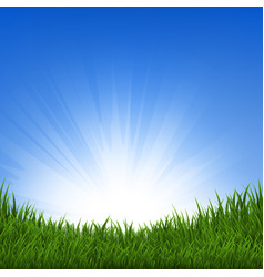 grass and sunbeam vector image