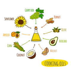 hand drawn infographic of cooking oil sorts vector image