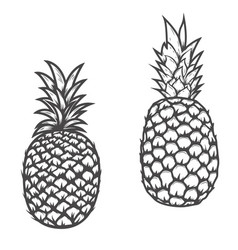 Set of pineapple icons isolated on white vector