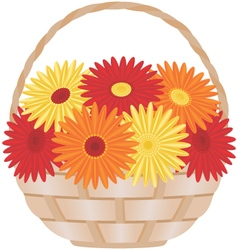 Gerber daisies flowers in a wicker basket vector