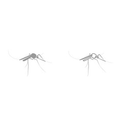mosquito it is black icon vector image