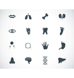 Black anatomy icons set vector