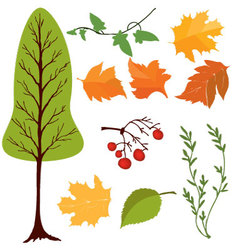 set of tree and leaves vector image