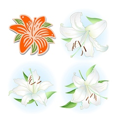 Orange white lilies set vector