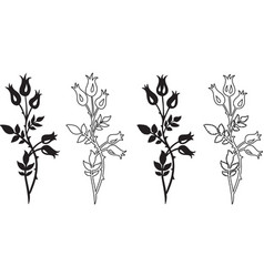 dog rose - two variants with different leaves vector image