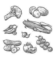 Set vegetables Cucumbers Garlic Corn Pepper vector image