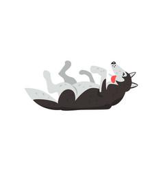Siberian husky dog character lying on the back vector