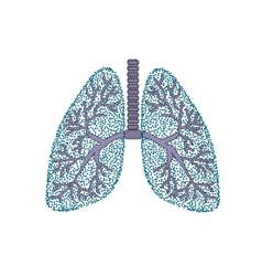 Lungs the structure of the human lung vector