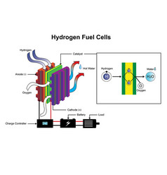 Hydrogen fuel cells diagram vector