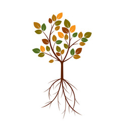 color tree and roots vector image