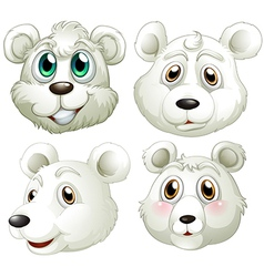 Heads of polar bears vector image vector image