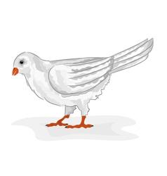 Bird white pigeon white dove symbol peace vector