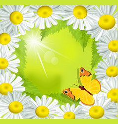 frame of daisies vector image