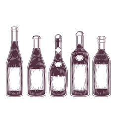 collection of wine bottles vector image