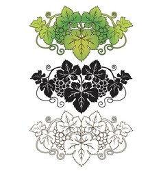 vignette grape vector image