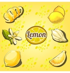 Lemon set the fruit drawn from different angles vector